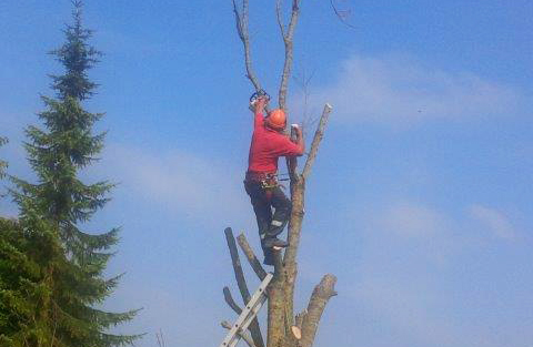 Tree Surgeon Swindon